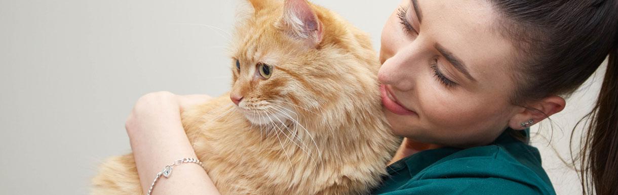 Cat friendly clinic